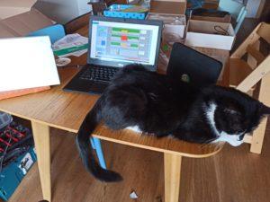 Test d'antennes avec un chat